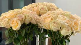 Get a dozen cream roses for Valentine's Day for $39